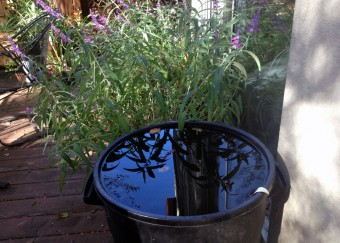 Saving-rainwater